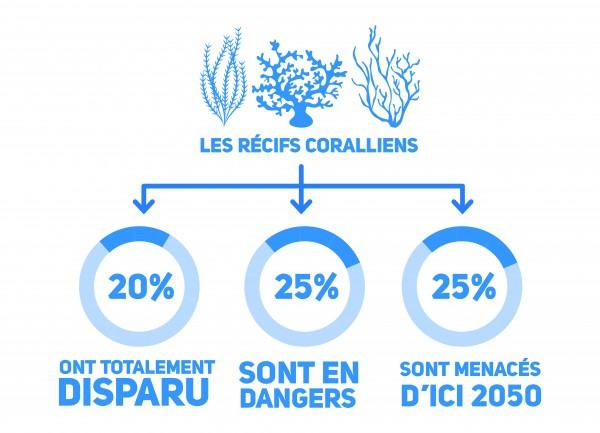 Infographie_ChangementClimatique_DisparitionCorail-300