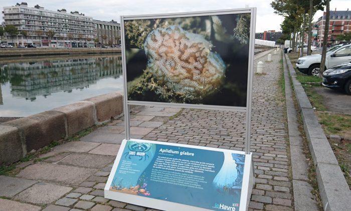 Début de l'exposition : bassin du Roy - Photo Surfrider Antenne Seine Maritime