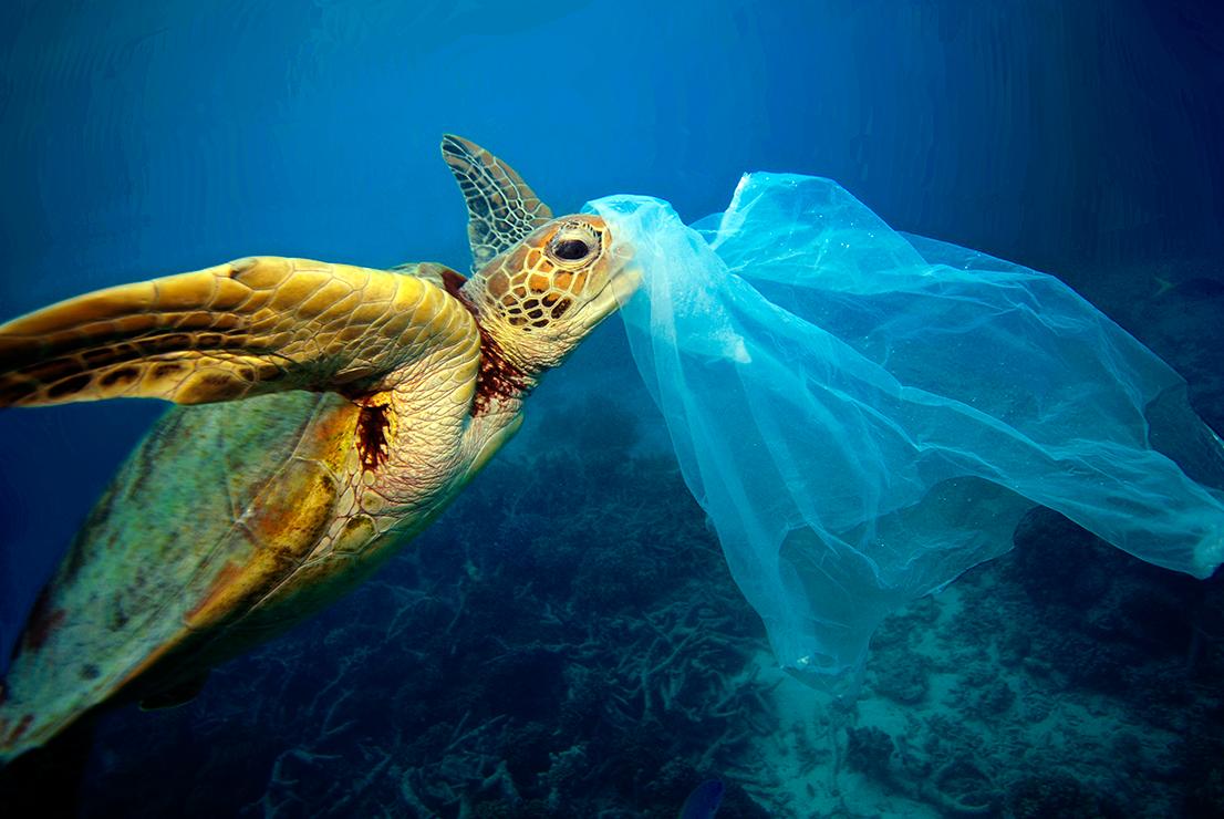 turtle-plastic-bag