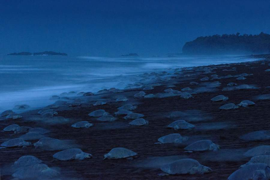 nuit des tortues ingo arndt