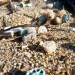 Biomédias (médias filtrants) retrouvés sur une plage de Bidart