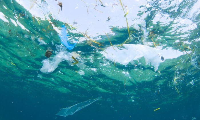 pollution sac plastique